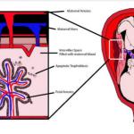 آزمایش خون مادر از نظر دی ان آ آزاد جنینی Cell Free Fetal DNA